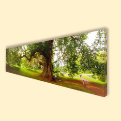 Canvas Prints - 18mm and 38mm Deep Frames